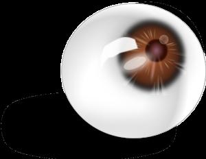 larmes artificielles lentilles